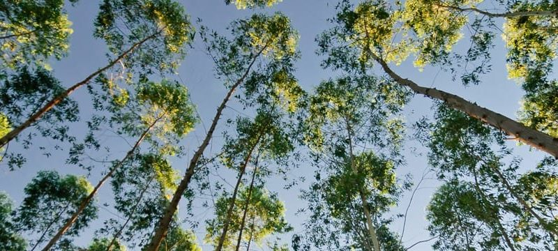 Sustainable wood forests are carbon neutral from cradle to grave