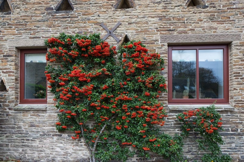 Windows in picuresque setting